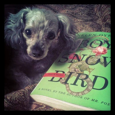 A tiny grey poodle--Murchie--with a closely shaved face and long ears lies next to a book. He faces the camera directly so only his head is visible. The book beside him is Boy Snow Bird. Its cover is leaf green with a vintagge-style illustration of a grey and yellow snake twining through the title. Pink roses and a small brown mouse also appear alongside the snake.