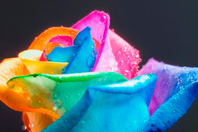 rainbow+rose+8 A Gift of Survival........