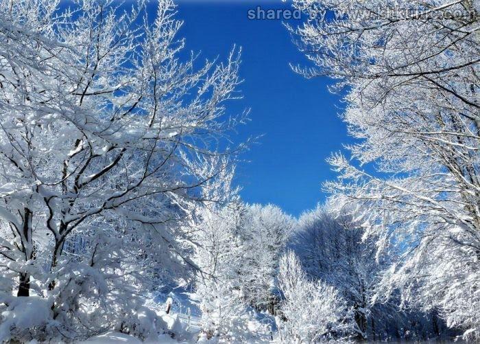 http://3.bp.blogspot.com/-m8JazG3NclI/TXlriu3toEI/AAAAAAAAQ0I/PGthmW6nr8k/s1600/winter_45.jpg