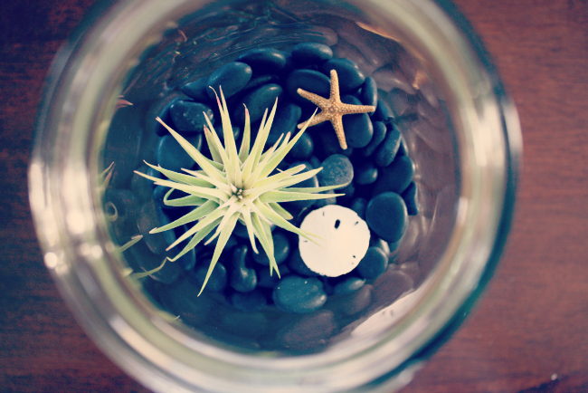 DIY Mason Jar Terrariums from @meetmakelaugh