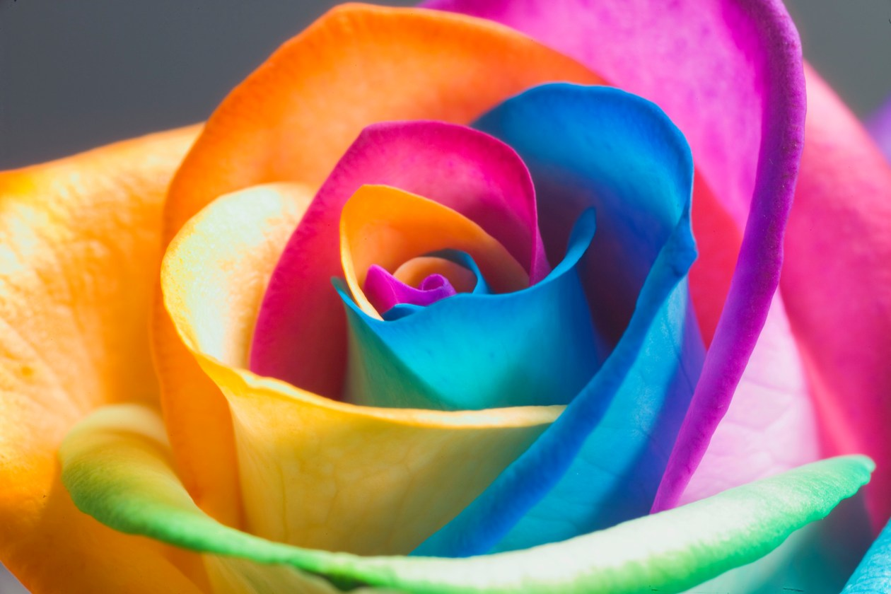My american french life beautiful beautiful spring for What are rainbow roses