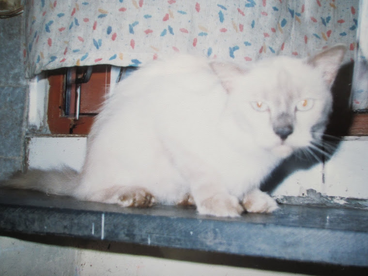 """Chintoo"", the cat that proved a mis-match for trixie.He was a real giant in size  although very do"