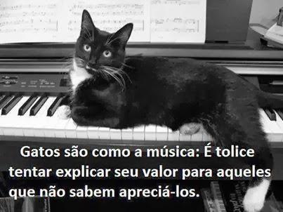 Gatos...