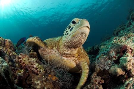 常出没的青海龟