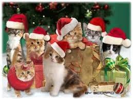 Gatitos Navideños