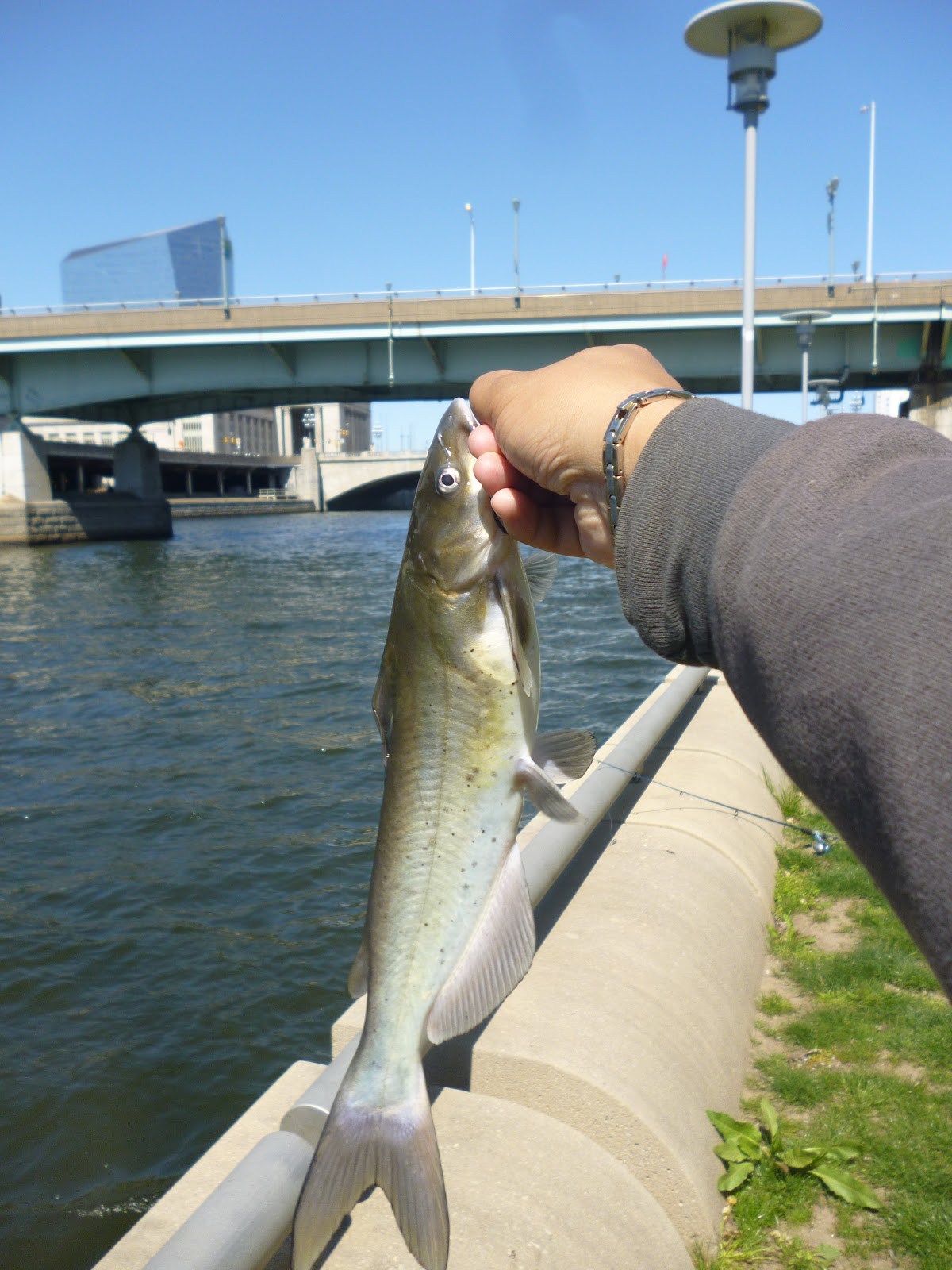 Extreme philly fishing the mighty schuylkill the best for Extreme philly fishing