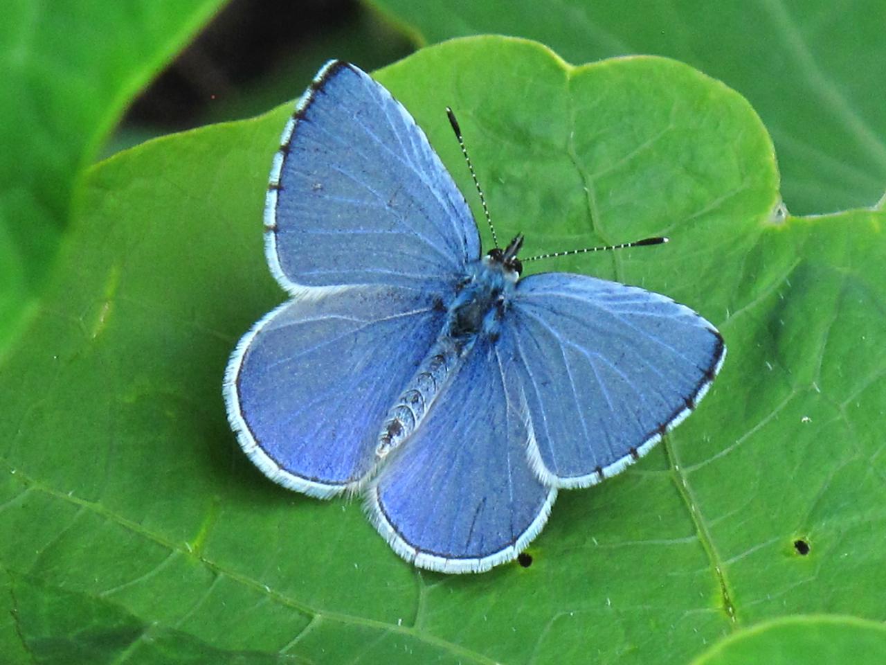 BugBlog: July 2011