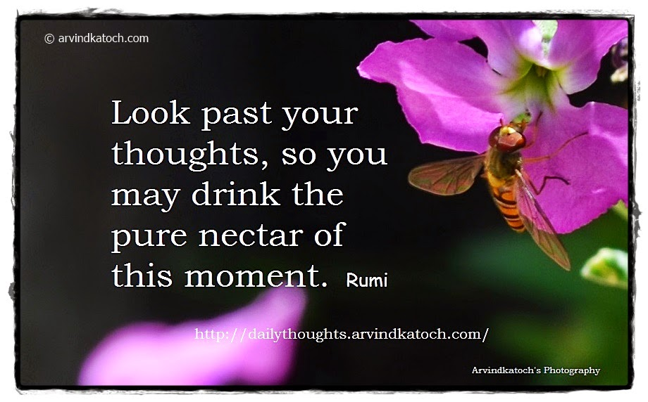 Rumi, Nectar, thoughts, moment, Daily Quote,