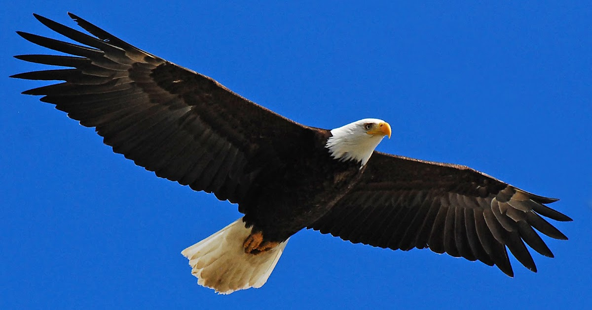 eagle poem by joy harjo Audio to pray you open your whole.