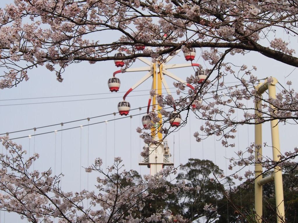 Beppu International Plaza: Beppu Today, 2013 March 23rd ...
