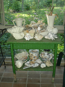 Seashells in the Sunroom
