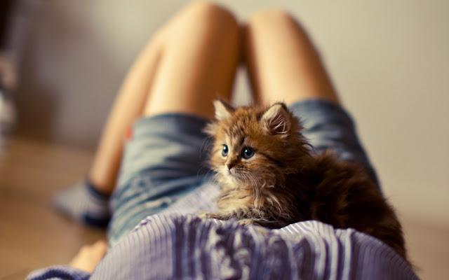 Hình ảnh về mèo đẹp nhất
