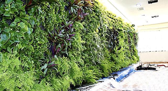 muros cultivables verticales la solucion a su cocina On muros vegetales verticales