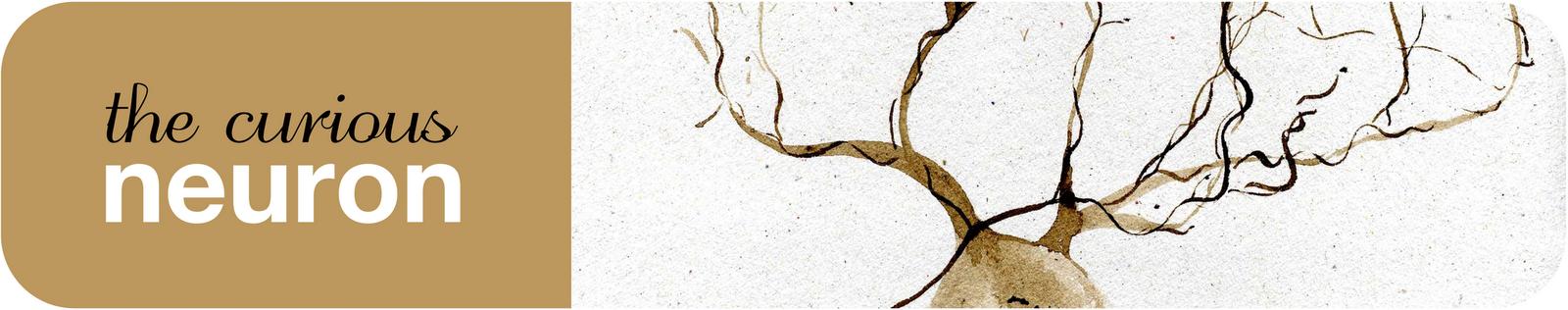 The curious neuron