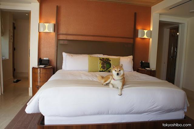 Hotel Bel Air Rue De La Voute Paris