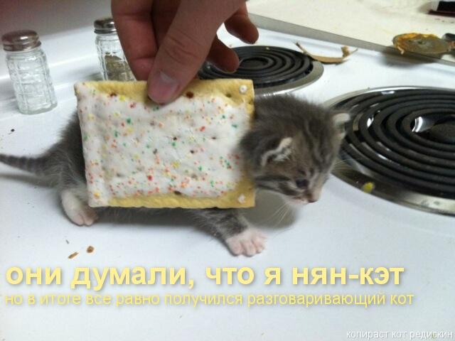 Котоматрица: они думали что я - нян-кэт, но в итоге все равно получился разговаривающий кот