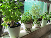 Fresh Herbs in the kitchen!