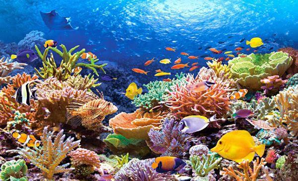 Bioloxía mariña