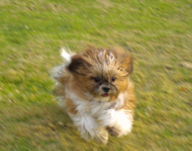 Tofi corriendo