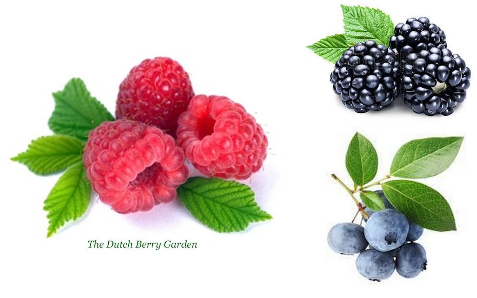The Dutch Berry Garden  - Blueberries - Raspberries - Blackberries