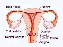 Penularan dan pencegahan penyakit pada sistem reproduksi