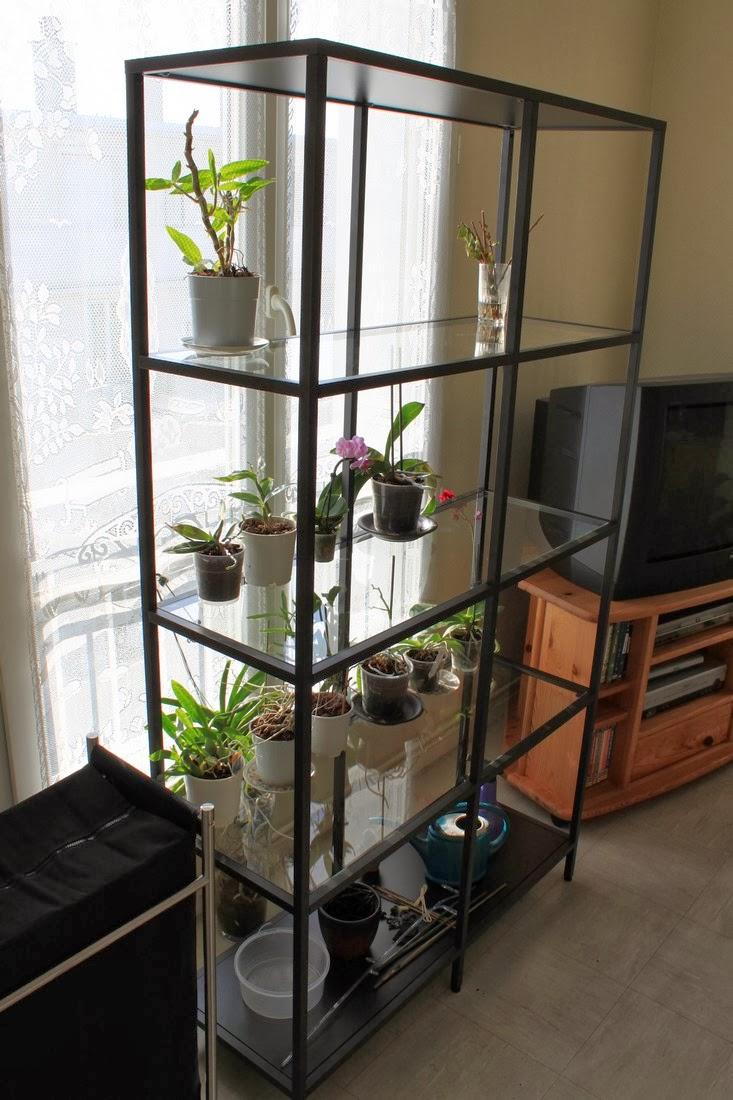 micha 39 s orchideen ein sehr h bscher zuwachs. Black Bedroom Furniture Sets. Home Design Ideas