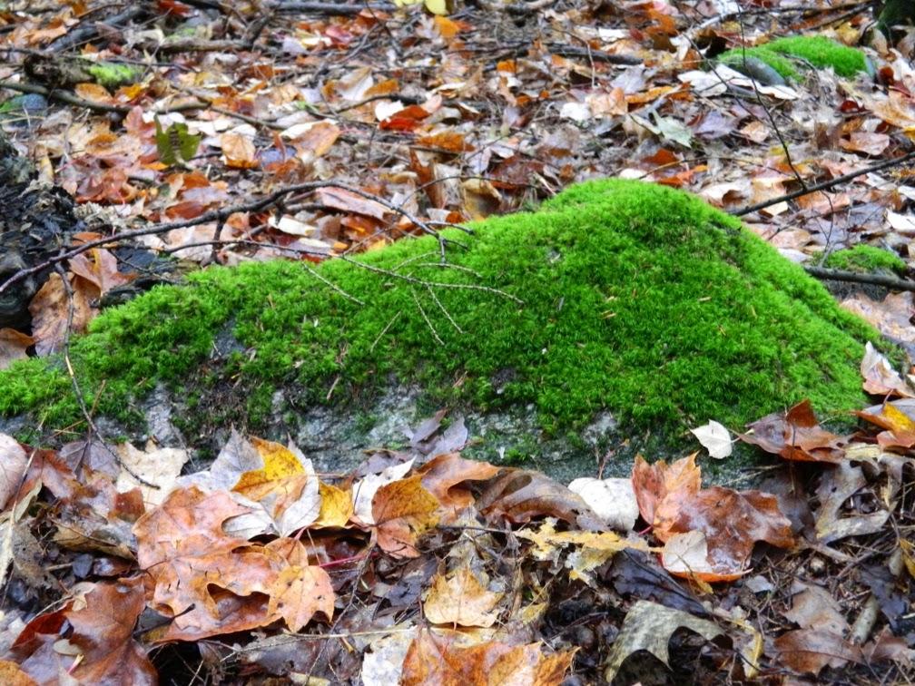 Lake Muskoka fall colours mossy rock by garden muses--a Toronto gardening blog