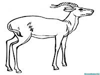 Halaman Mewarnai Gambar Antelope