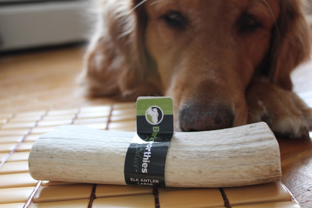 Barkworthies Elk Antler chew review and giveaway