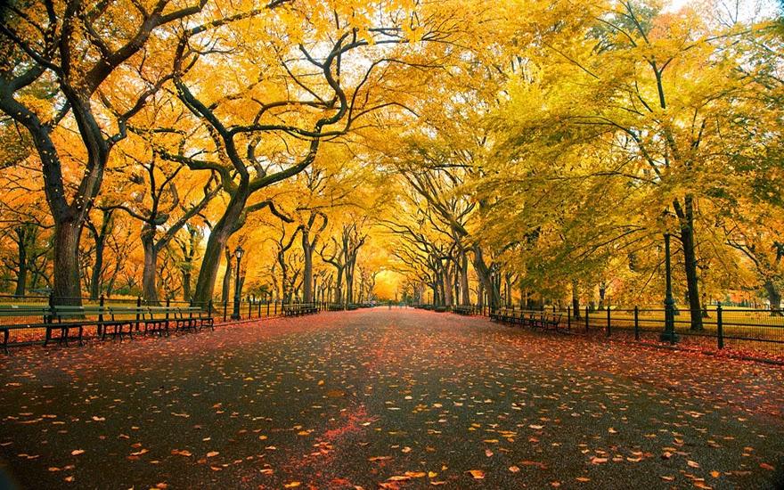 تحكي جمال وروعة الخريف autumn6.jpg