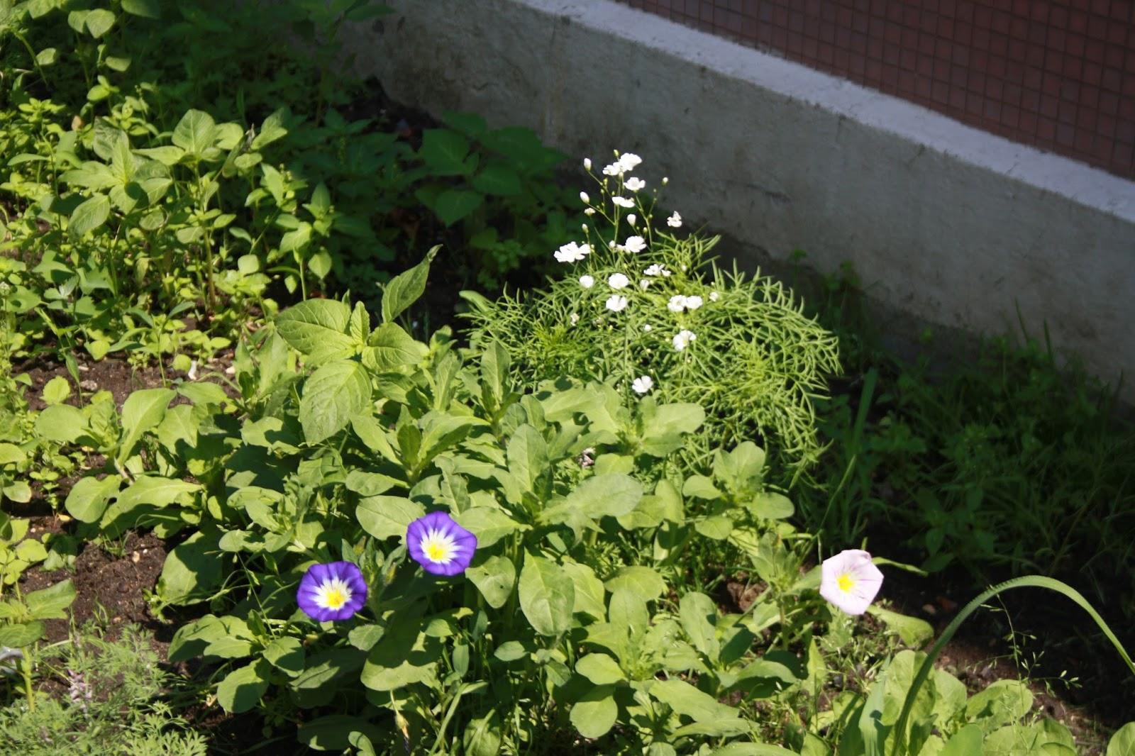 Jardin de la maison pour tous de la courneuve for Jardin pour tous