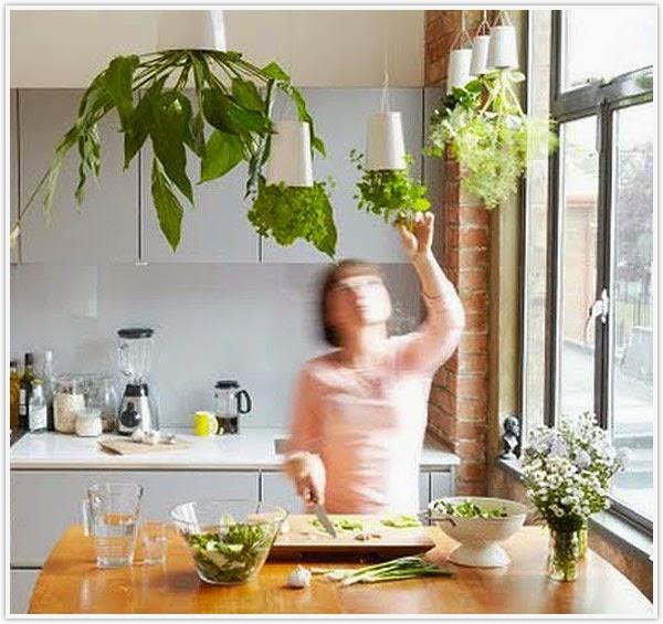 How to Maintain a Kitchen Herb Garden