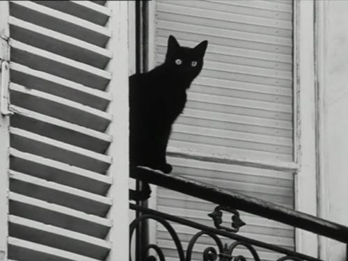 http://3.bp.blogspot.com/-mD947yL0fVk/UCvmuCyc02I/AAAAAAAADQ4/cbKRhm8O9BU/s1600/bampw-black-and-white-black-cat-cat-les-amants-reguliers-Favim.com-97449.jpg