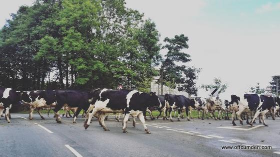 Countryside traffic jam