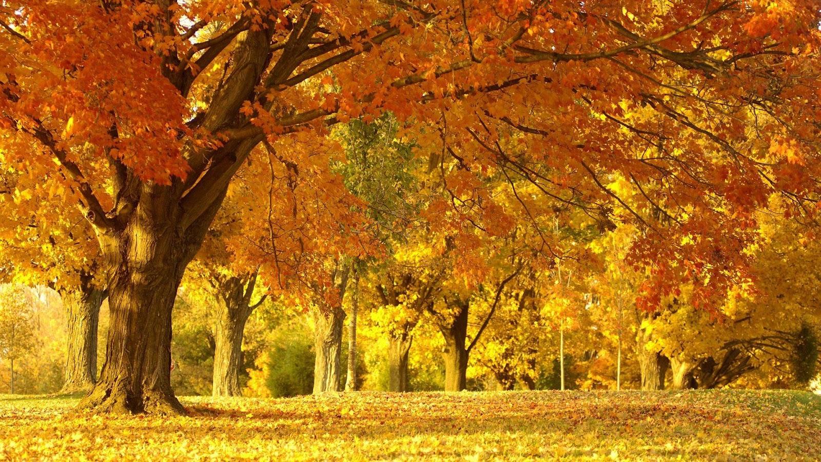 http://3.bp.blogspot.com/-mDNzrwYSnUw/URwJddsZOVI/AAAAAAAAGlc/XF3dVQlUysE/s1600/Walpaper+pemandangan+alam.jpg