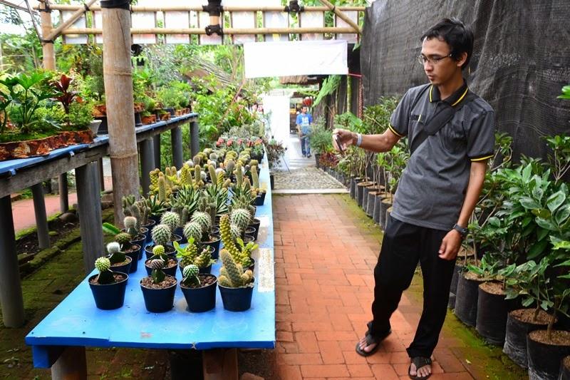 Koleksi Tanaman Kaktus Eco Green Park Batu Malang