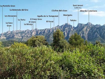 Impressionant vista de la muntanya de Montserrat destacant enmig del verd del bosc