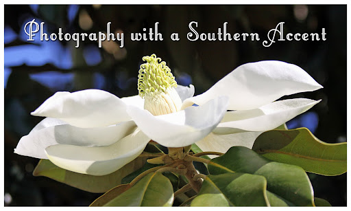 Photography with a Southern Accent