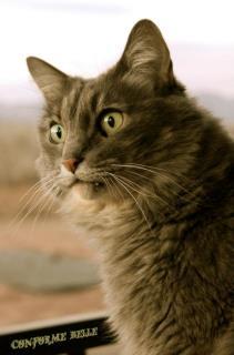 Кот смотрит на говорящего Брэда Питта
