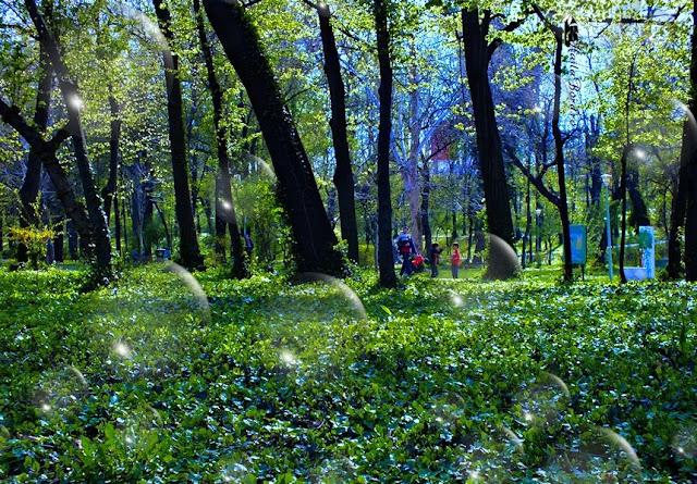 primavara parcul carol aprilie