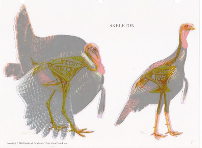 Parts Diagram Wild Turkey - Basic Guide Wiring Diagram •