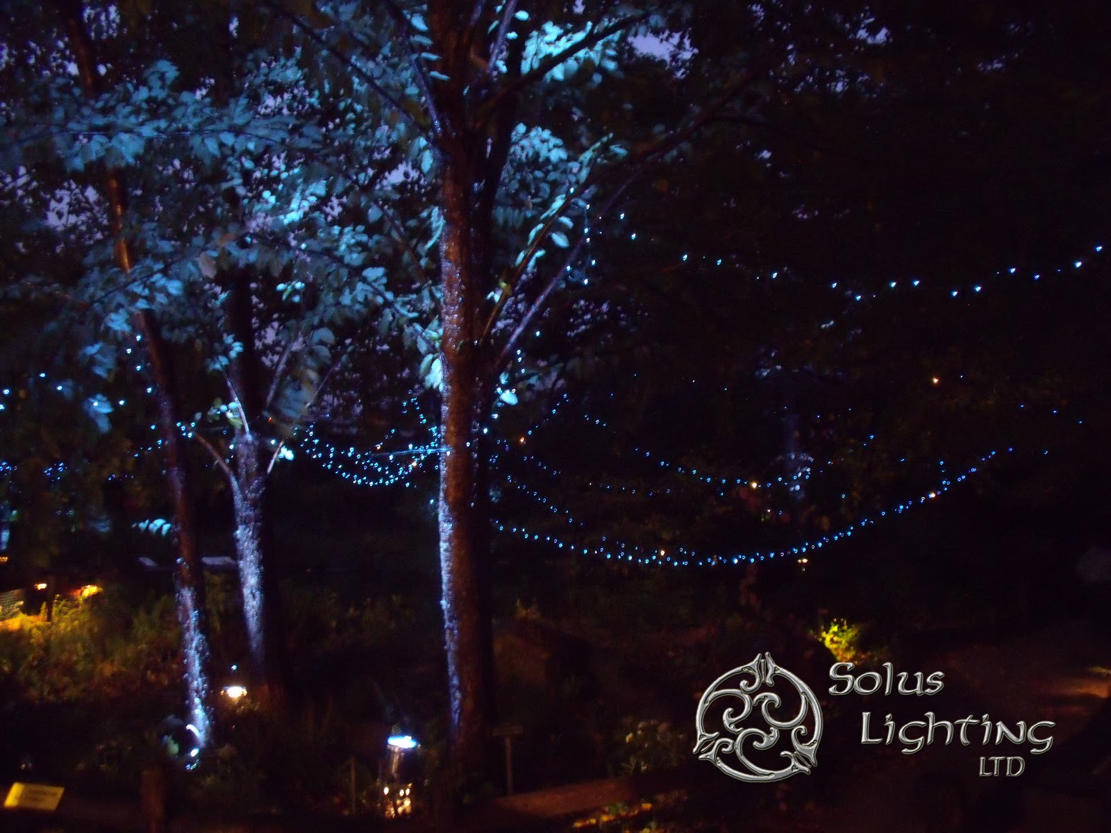 Record setting weekend for Solus Lighting LTD : solus lighting - azcodes.com
