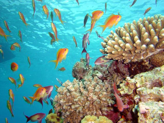 Чистая вода богатый подводный