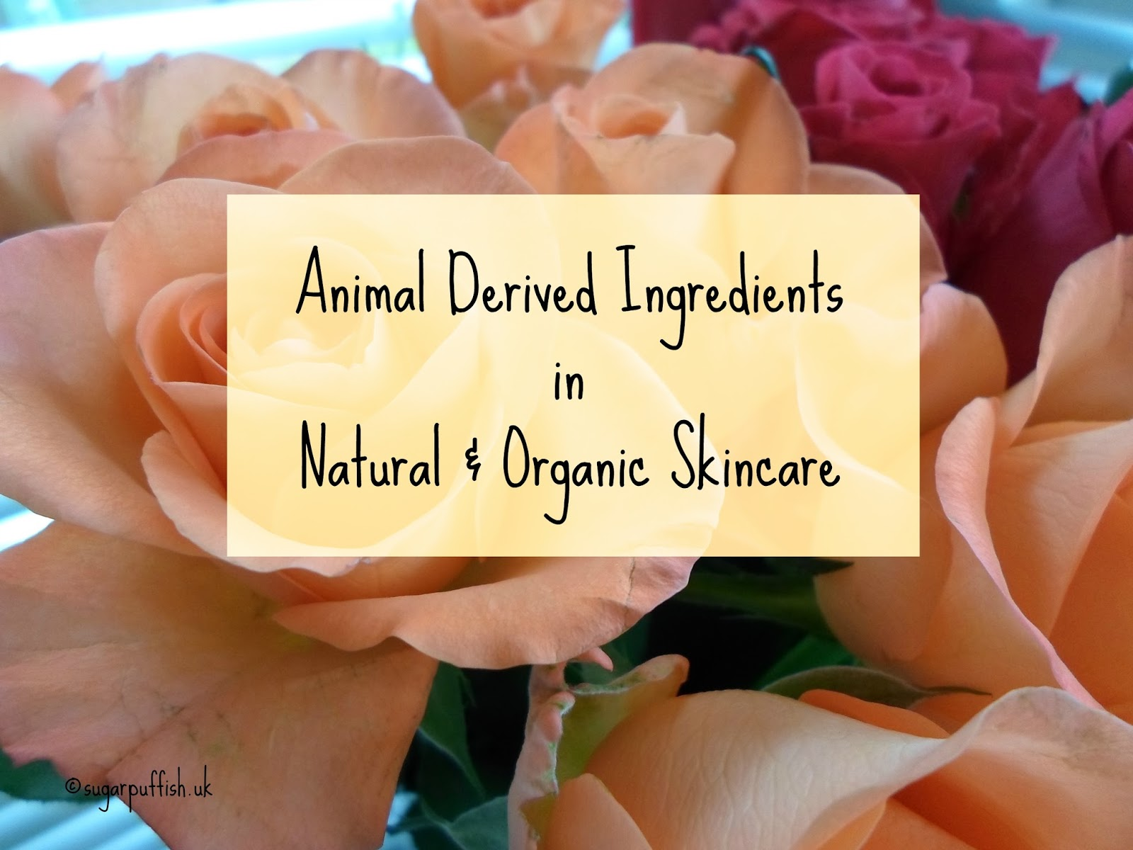 Animal Derived Ingredients in Natural & Organic Skincare