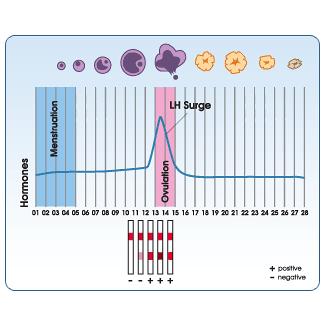 Hormona Luteinizante LH