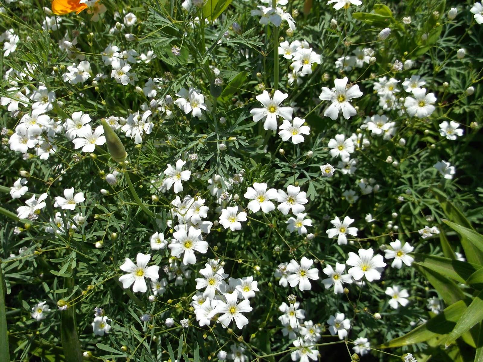Цветок с белыми листьями