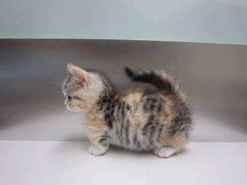 Very cute cat cute cat picture voltagebd Gallery
