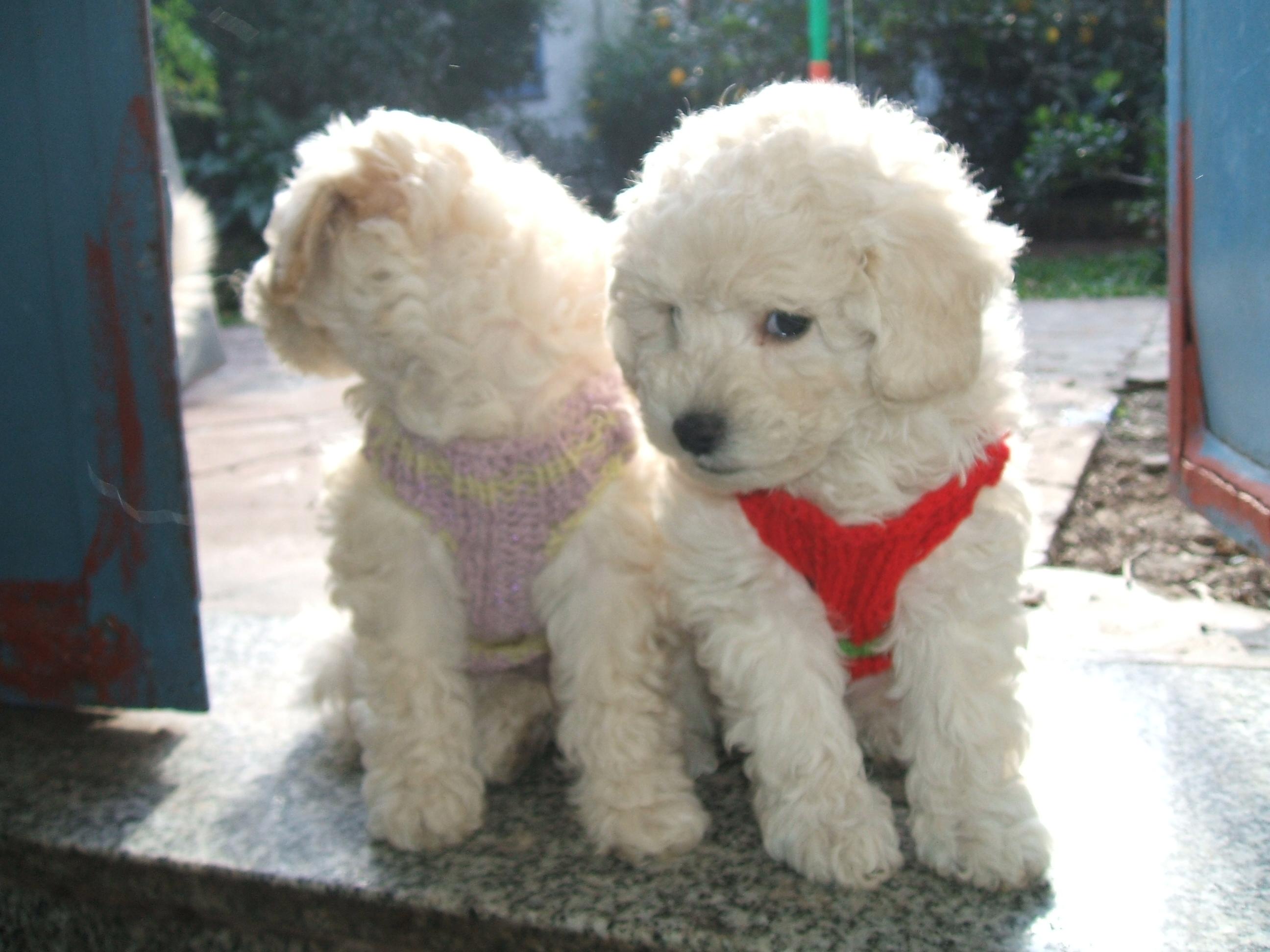 PZ C: perros de raza