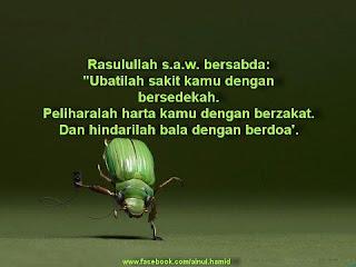 http://3.bp.blogspot.com/-mFzaYF-TM28/URPF7TqvPTI/AAAAAAAAExE/JXe9-j5ntvA/s1600/kumbang.jpg