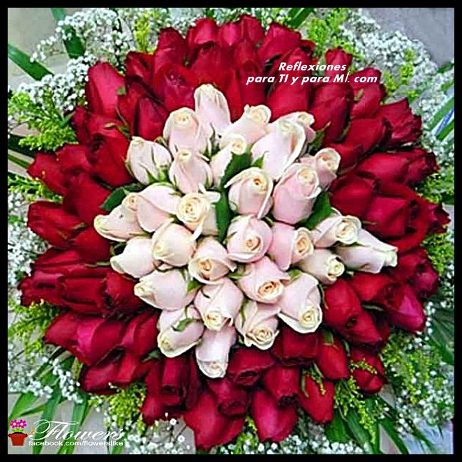 ramos de rosas rojas con mensajes de buenas noches  - Imagenes De Rosas Rojas De Buenas Noches